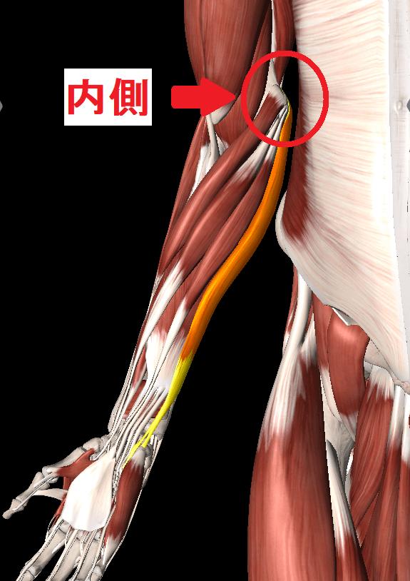 肘内側の痛み